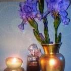 Hanae Mori Purple Butte...
