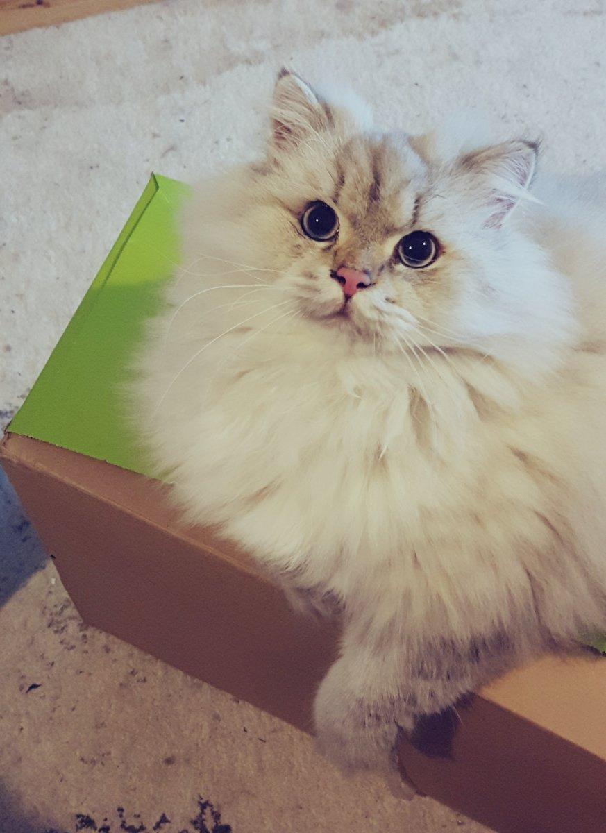Fettes auf Paket