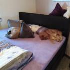 So ein Bett ist doch to...