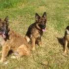 Meine 3 Helden. Merlin,...