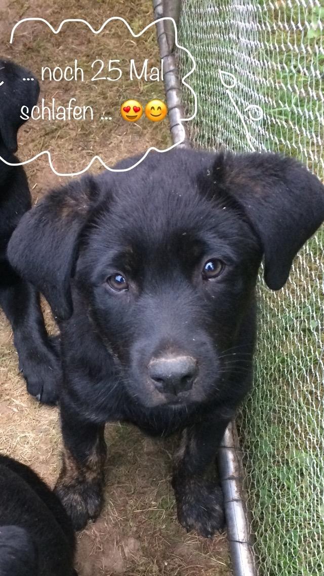 Bobby, der mir auch Mittwochs gehört und bald eine Ausbildung zum Schulhund macht