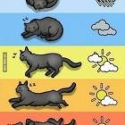 Katzenbarometer - könn...