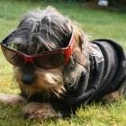 OLEG... Mein Hund :-) i...