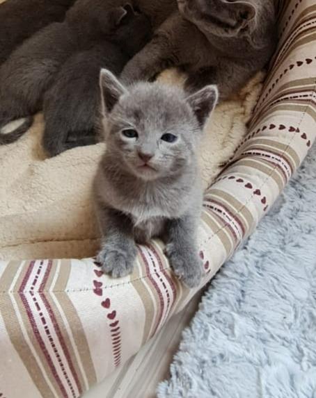 Na dann gibts von mir eben auch mal ein Katzenfoto :-D wieder ein Mädchen mehr in unserer Familie