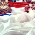Wake up, Mom! We want t...