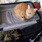 Er liebt Koffer....