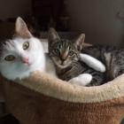 Emmi und Rosie - best f...