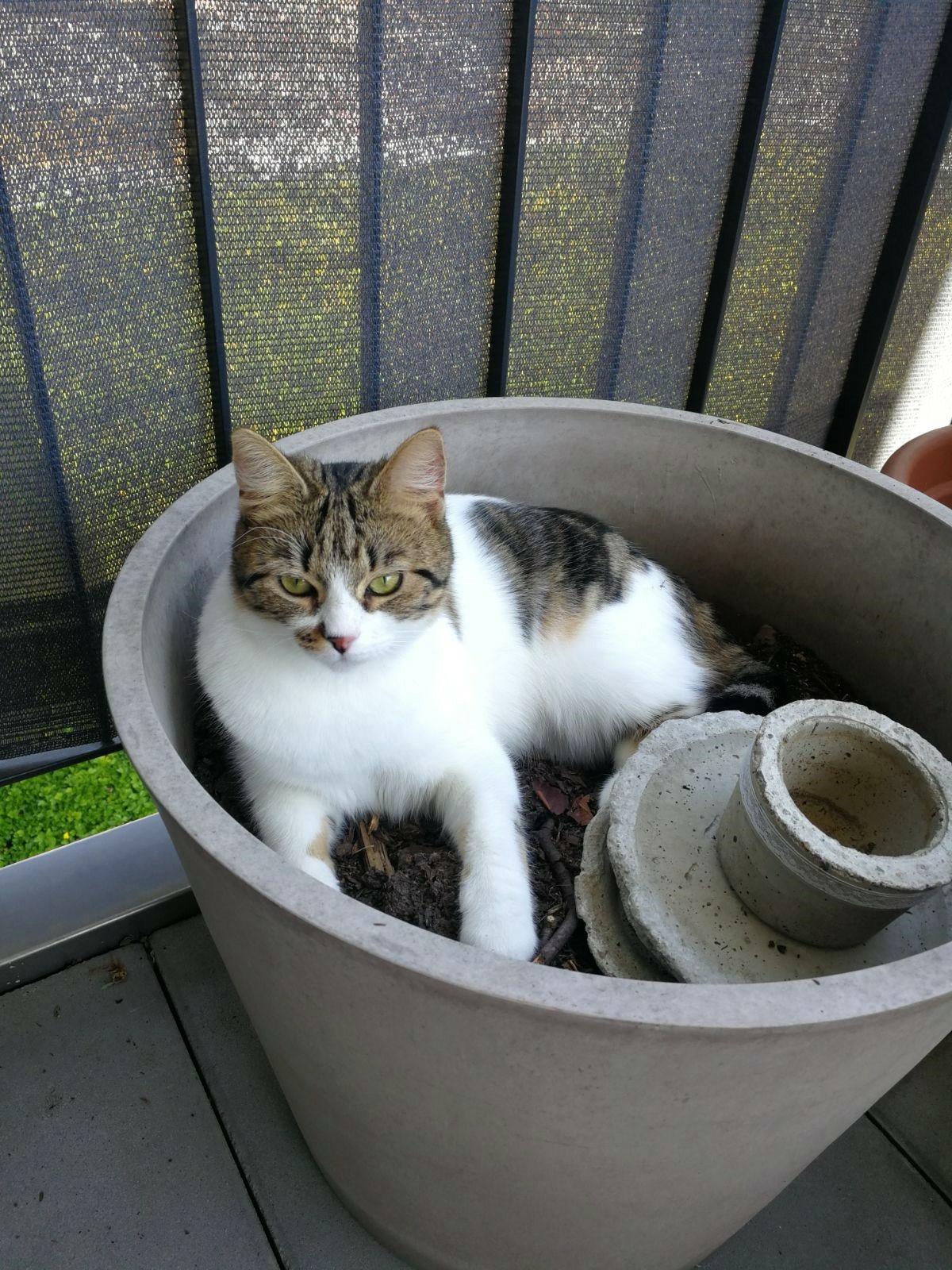 Alle haben hier ja Katzenfotos...: mein Topfpflanzen-Tiger