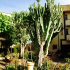 Kalabriens Bäume