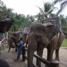 Elefantenpark Taro, Bal...