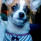 baby puppy Chloe in her...