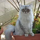 Holly for Cats - Topmod...