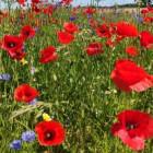 Meine Lieblingsblumen, ...