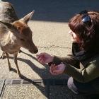 Nara (Japan)
