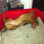 Relaxed Joco