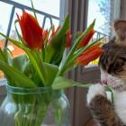 Auch ich kann Katzencon...
