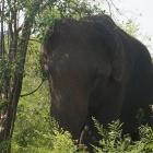 Udawalawe  Nationalpark...