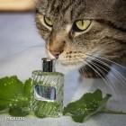Parfumokatze