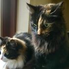 Stine & Minou