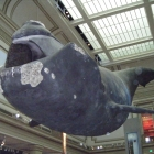 Smithsonian, Washington...