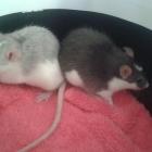 Roxy & Coco