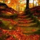 Mein Lieblings-Herbstbi...