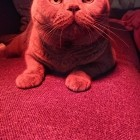 Kitty in red