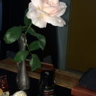 A rose above Une Rose...