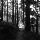 Weg (Wald von Brocélia...