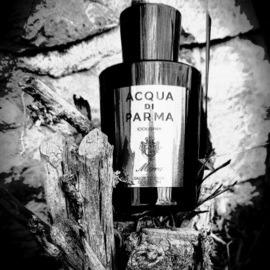 Cacao Ceremony - Gather Perfume