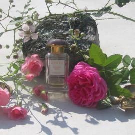 Evening Rose von Aerin