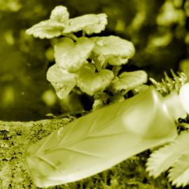 Nature (Eau de Toilette) - Yves Rocher