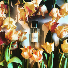 Tulipe - Le Galion