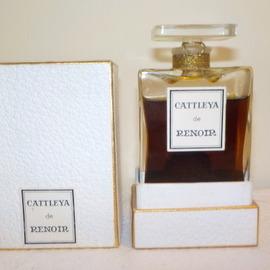 Cattleya by Renoir