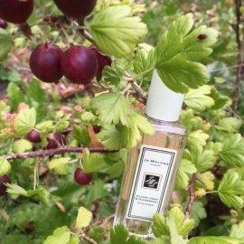 Elderflower Cordial / Elderflower & Gooseberry - Jo Malone