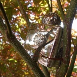 Reflection Woman (Eau de Parfum) von Amouage