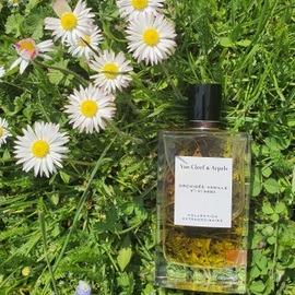 Collection Extraordinaire - Orchidée Vanille von Van Cleef & Arpels