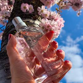 Fleurs de Cerisier / Cherry Blossom (Eau de Toilette) von L'Occitane en Provence