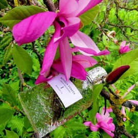 Parco Palladiano I: Magnolia - Bottega Veneta