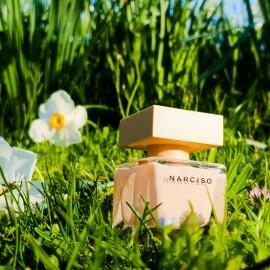 Narciso (Eau de Parfum Poudrée) by Narciso Rodriguez