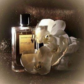 Collection Extraordinaire - Orchidée Vanille - Van Cleef & Arpels