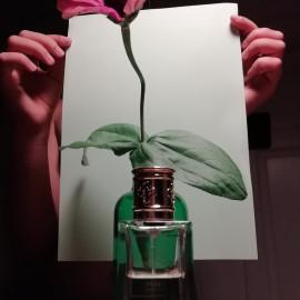 Santal du Pacifique (Extrait de Parfum) - Perris Monte Carlo