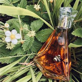 Pure Honey - KKW Fragrance / Kim Kardashian