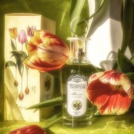 Aromaty prirody - Tyul'pan i mimoza / Ароматы природы - Тюльпан и мимоза by Brocard / Брокард