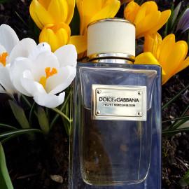 Velvet Mimosa Bloom von Dolce & Gabbana