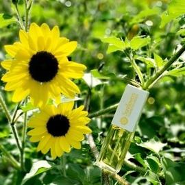 Sunflowers (Eau de Toilette) - Elizabeth Arden