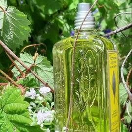 Verveine Agrumes / Citrus Verbena (Eau de Toilette) by L'Occitane en Provence