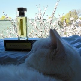 Mimosa pour Moi by L'Artisan Parfumeur