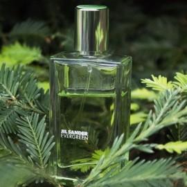 Evergreen von Jil Sander