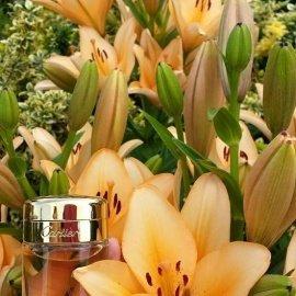Baiser Volé (Essence de Parfum) - Cartier